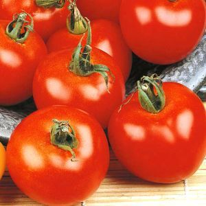 Tomato Moneymaker Seed Bag Picture